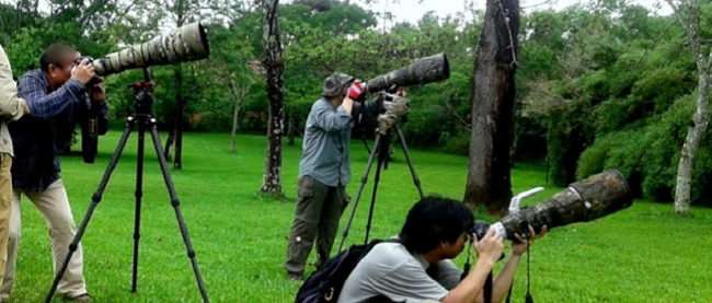 Birdwatching - Iemanja