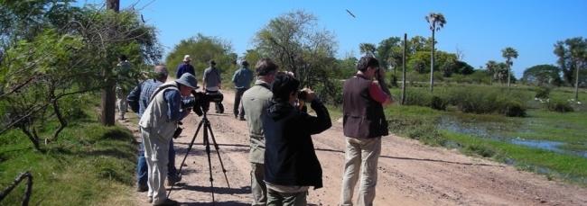 Birdwatching - Iemanja