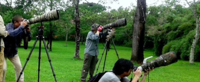 Birdwatching - Iguazú /  - Iemanja