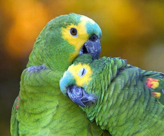 Centro de Recría de Aves Amenazadas (Güirá Oga) - Iemanja