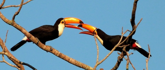 Observación de aves - Iguazú /  - Iemanja