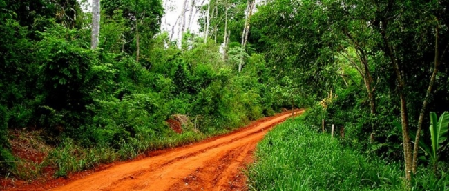 Iguazú Forest - Iguazú /  - Iemanja