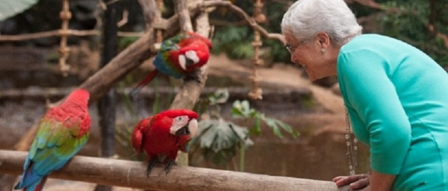 Parque de Aves - Iguazú /  - Iemanja