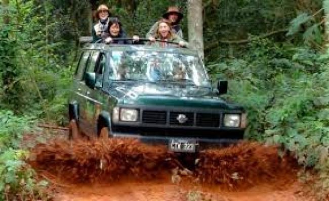Safari dans la Fôret